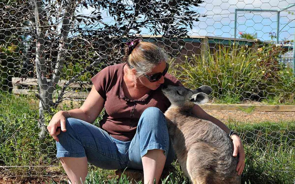 Play with the animals in country settings at Riverview Rise Retreat accommodation