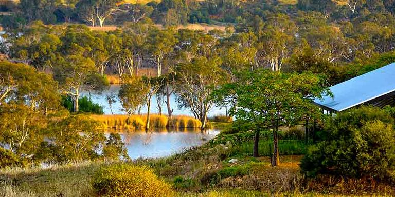 Stay in a country environment with trees and the Murray River